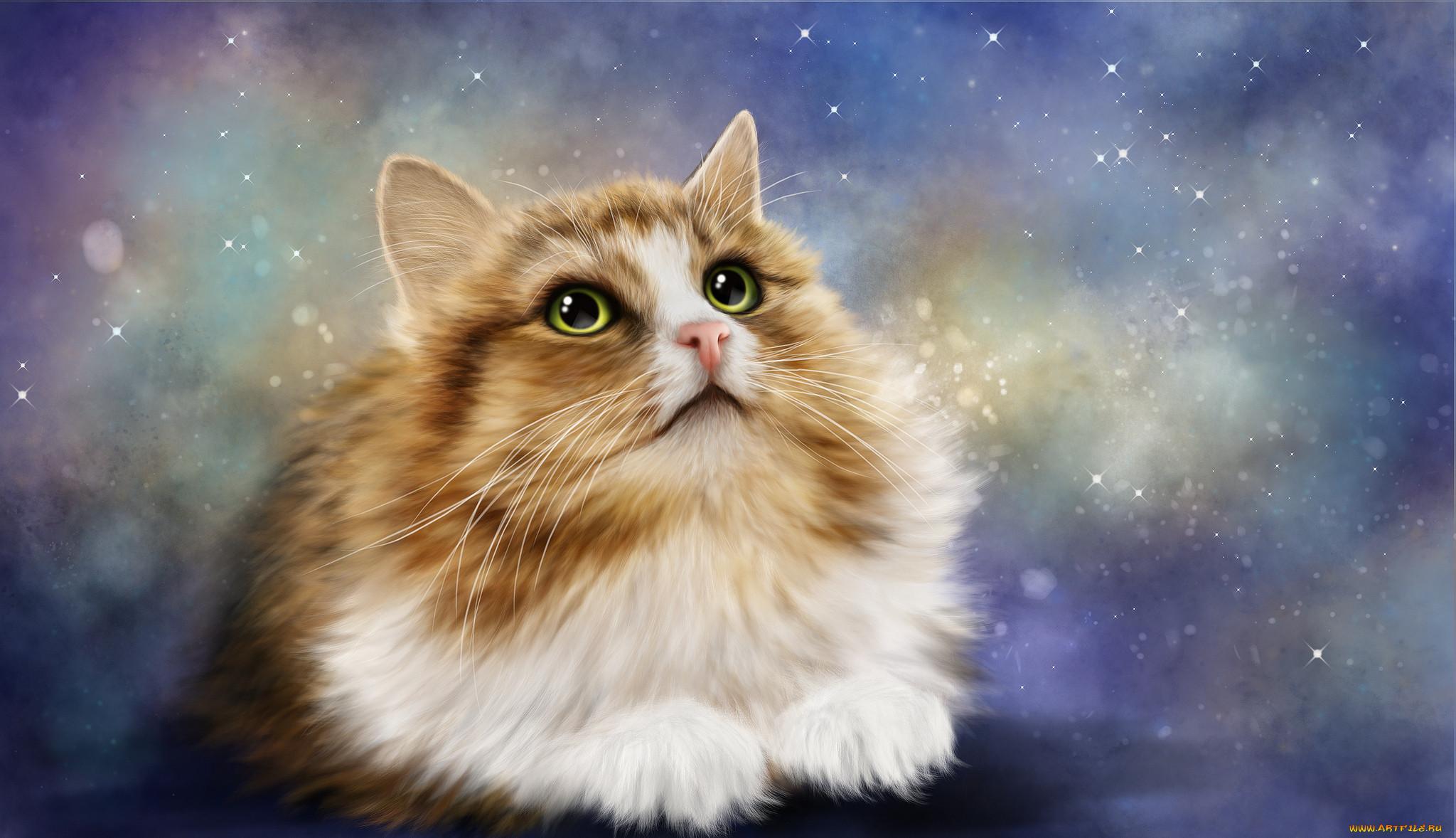 Фоновые картинки кошки
